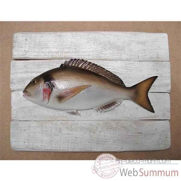 Vid o cadre poisson de mer cap vert dorade royale cadr03 for Deco poisson bois