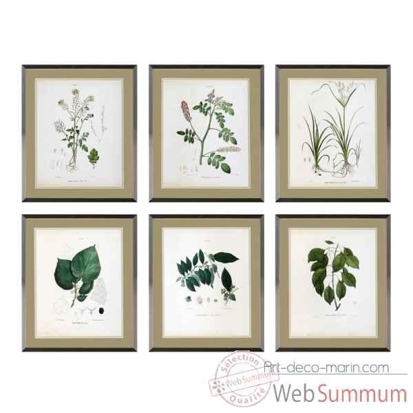 Cadre Avec Impréssions Botanica S6 Eichholtz 09380 De Décoration