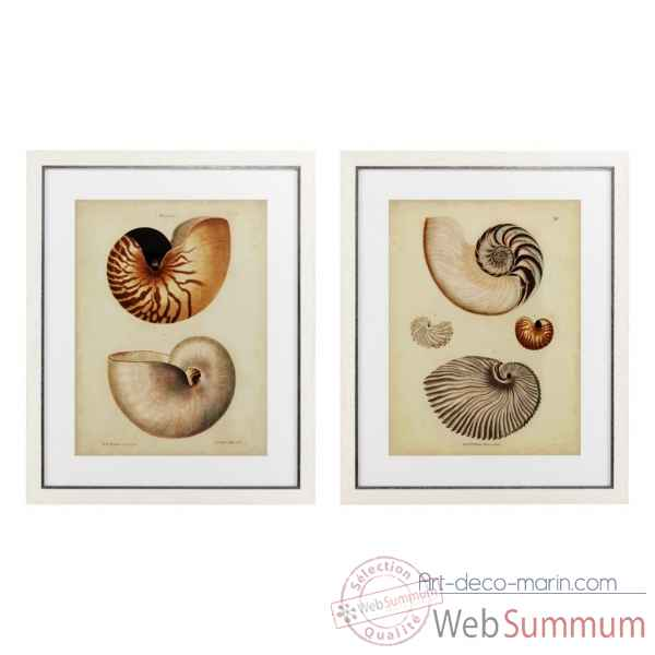 Tableaux antique nautilus set de 2 eichholtz -110133